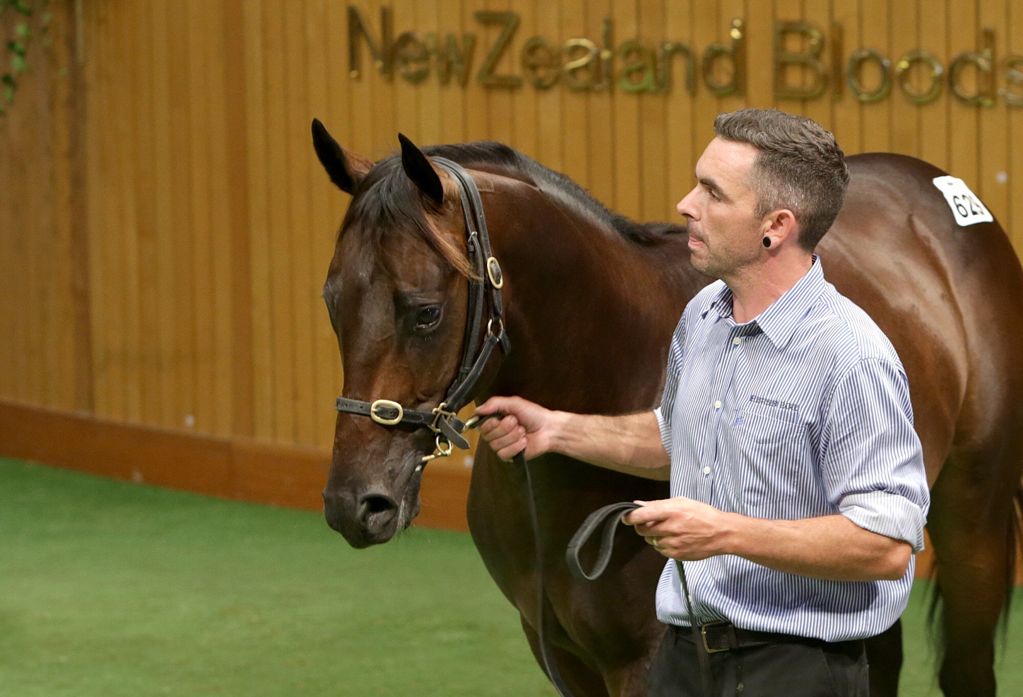 Hong Kong Derby winner Sky Darci with Highden Park's Sam Bleakley at the 2018 New Zealand Bloodstock Yearling Sales. Photo: Trish Dunnel