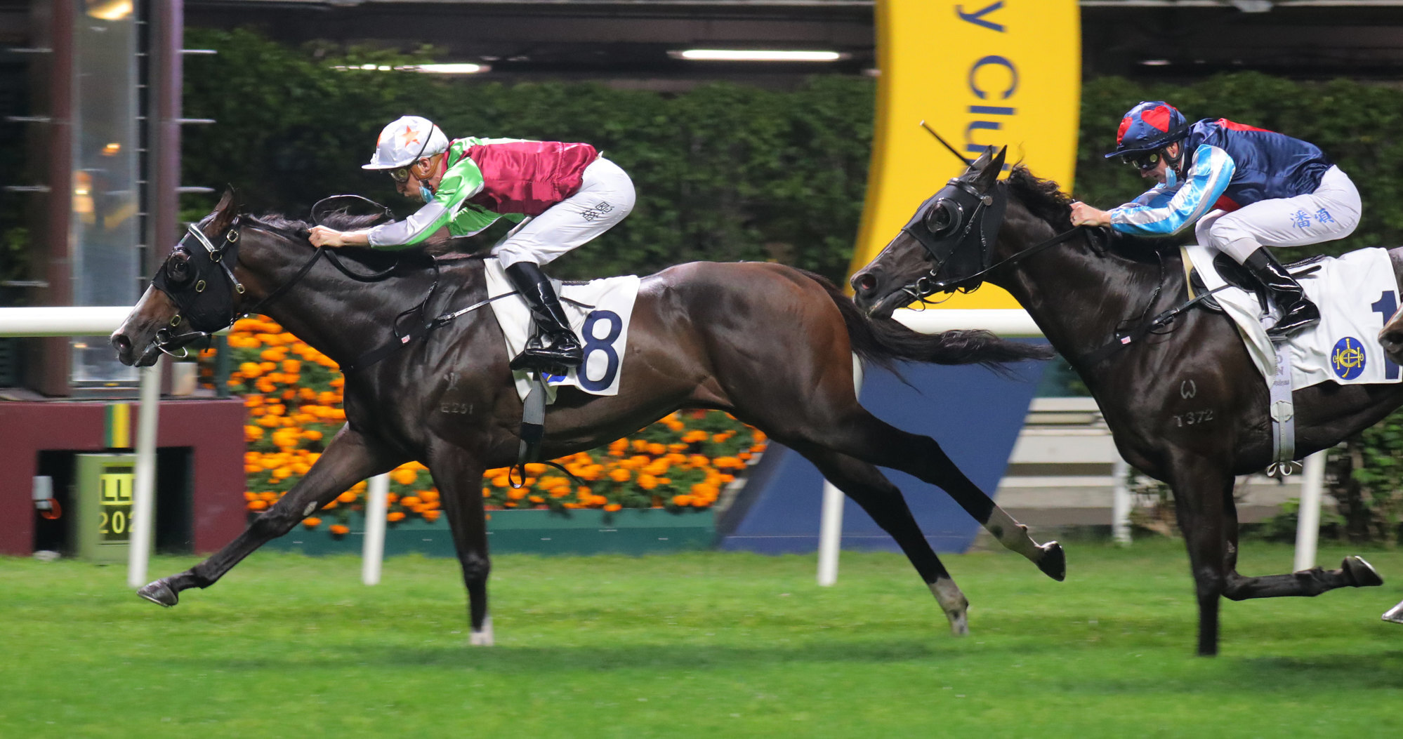 Blake Shinn boots home Showina at Happy Valley on Wednesday night.