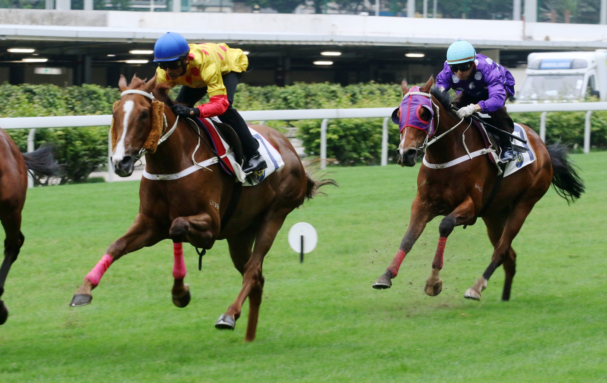 Gold Win trials at Happy Valley in 2019.