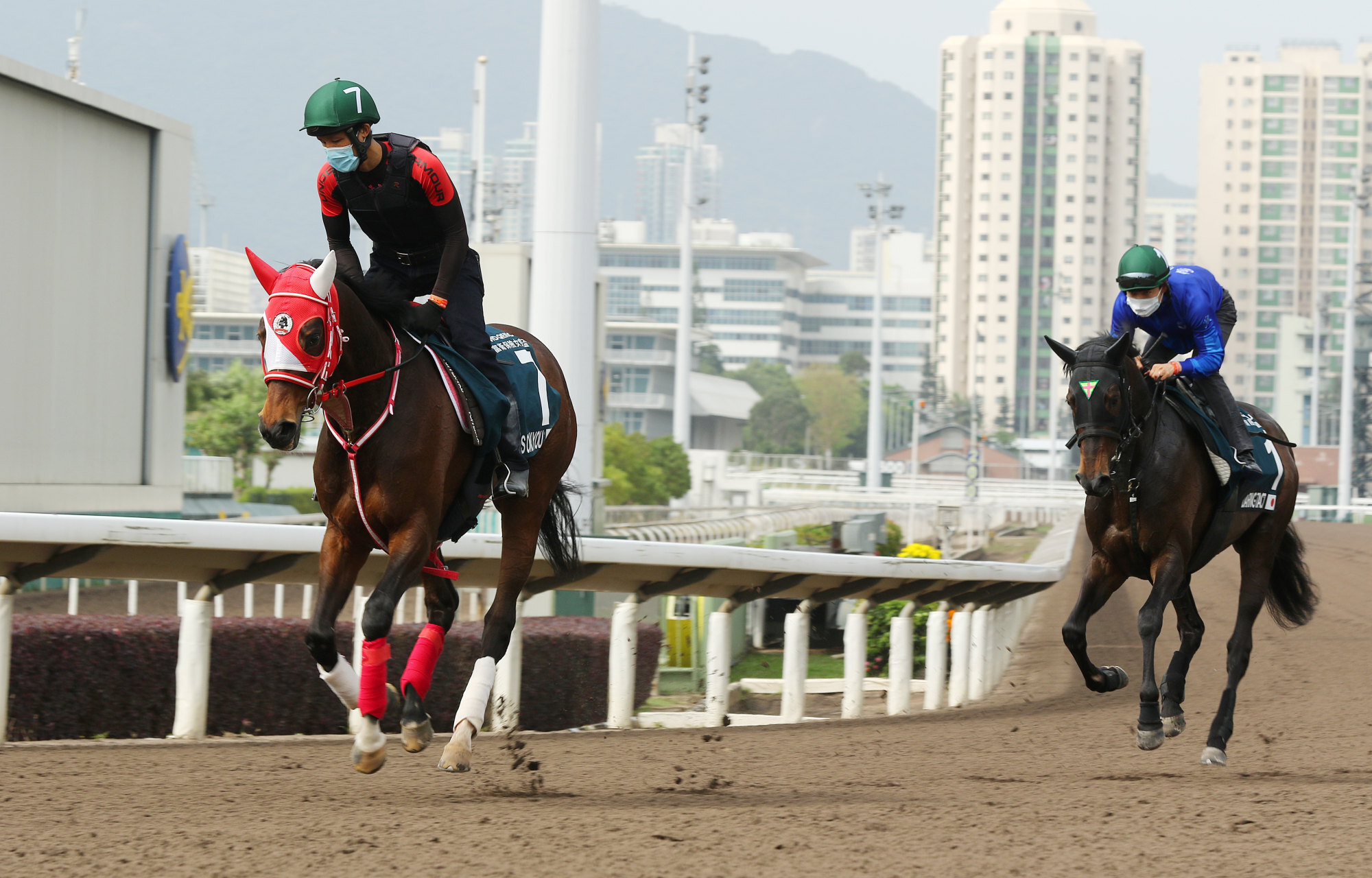 Daring Tact (right) works with Loves Only You ahead of Sunday's QE II Cup.
