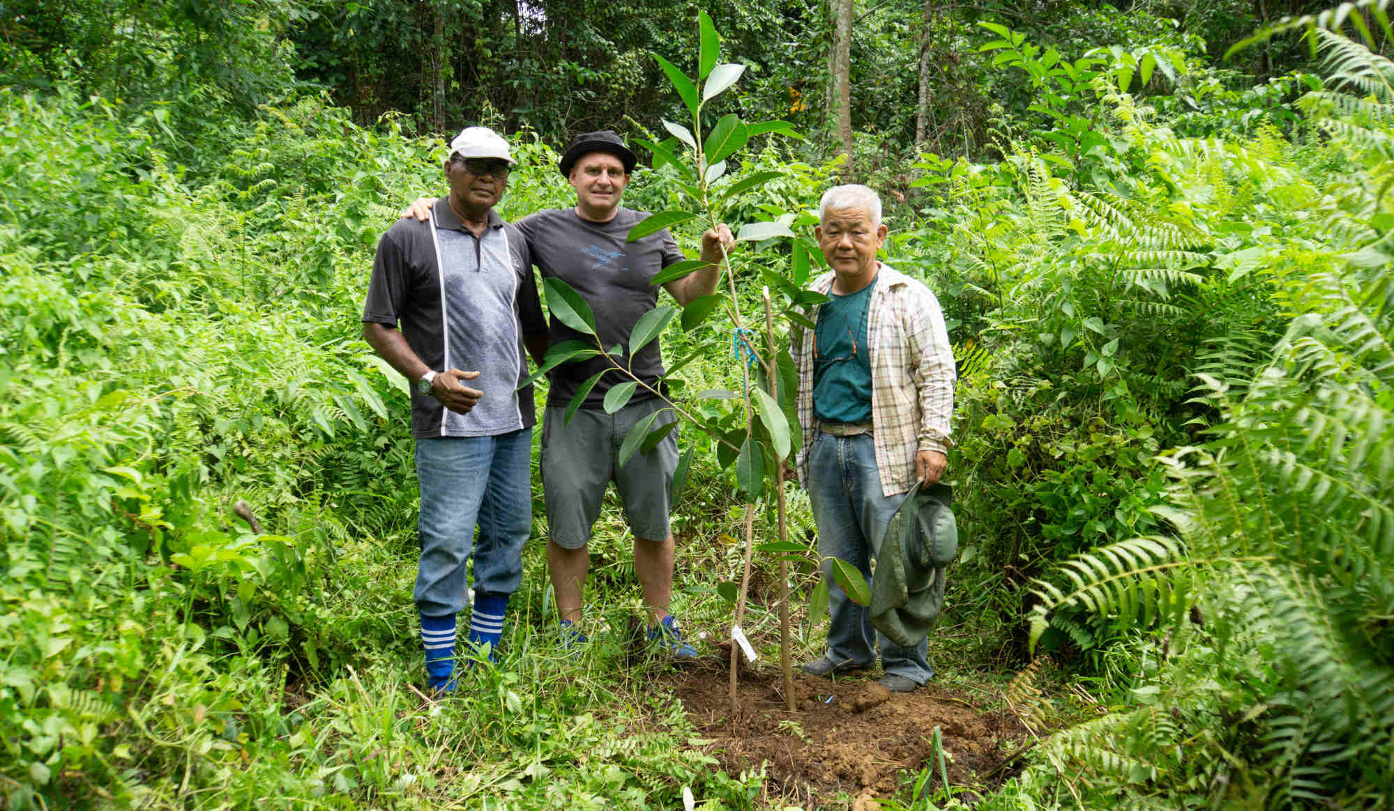 Simone Werren (centre) in the fig tree planting area of Bukit Piton Forest Reserve. Photo: courtesy of Simon Werren