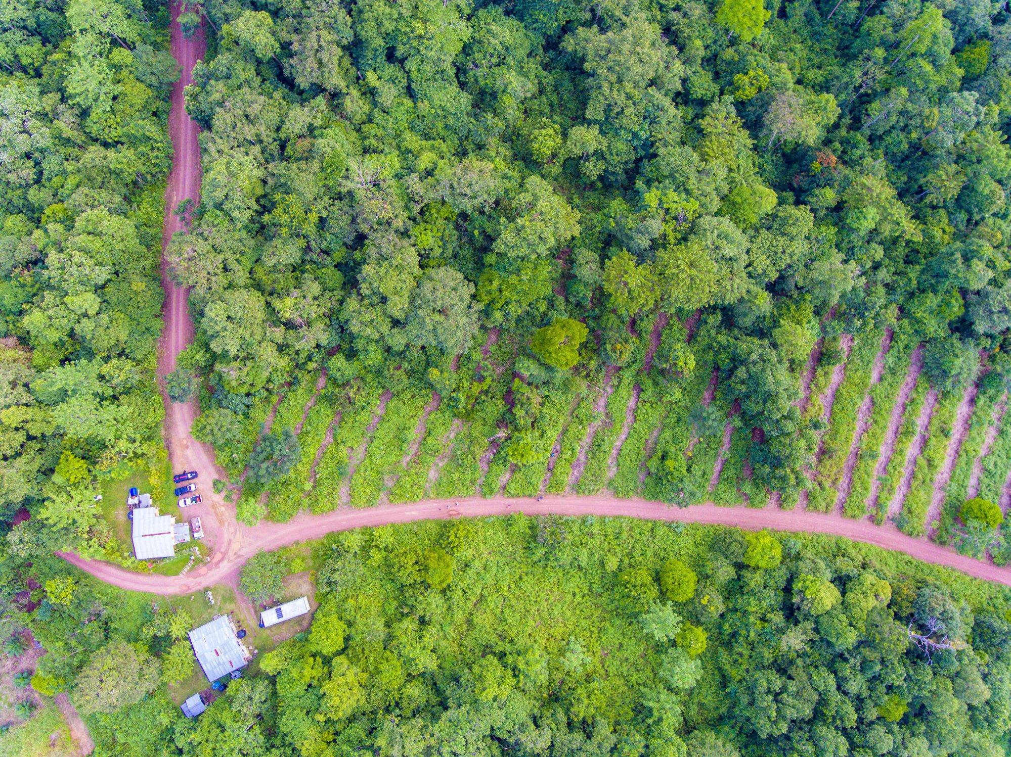 An aerial view of the Bukit Biton Piton Reserve. Photo: courtesy of Simon Werren