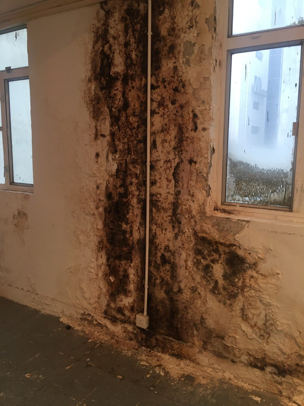 mold, artist Norm Yip's moldy studio was featured in SCMP