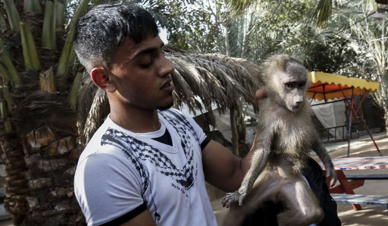 Dozens of neglected animals rescued from run down Gaza zoo | South