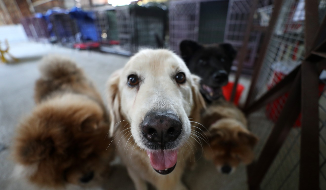 Some courts in other countries have realised the severity of animal abuse and enacted laws that protect pets against violence the same way humans are covered. Photo: Winson Wong