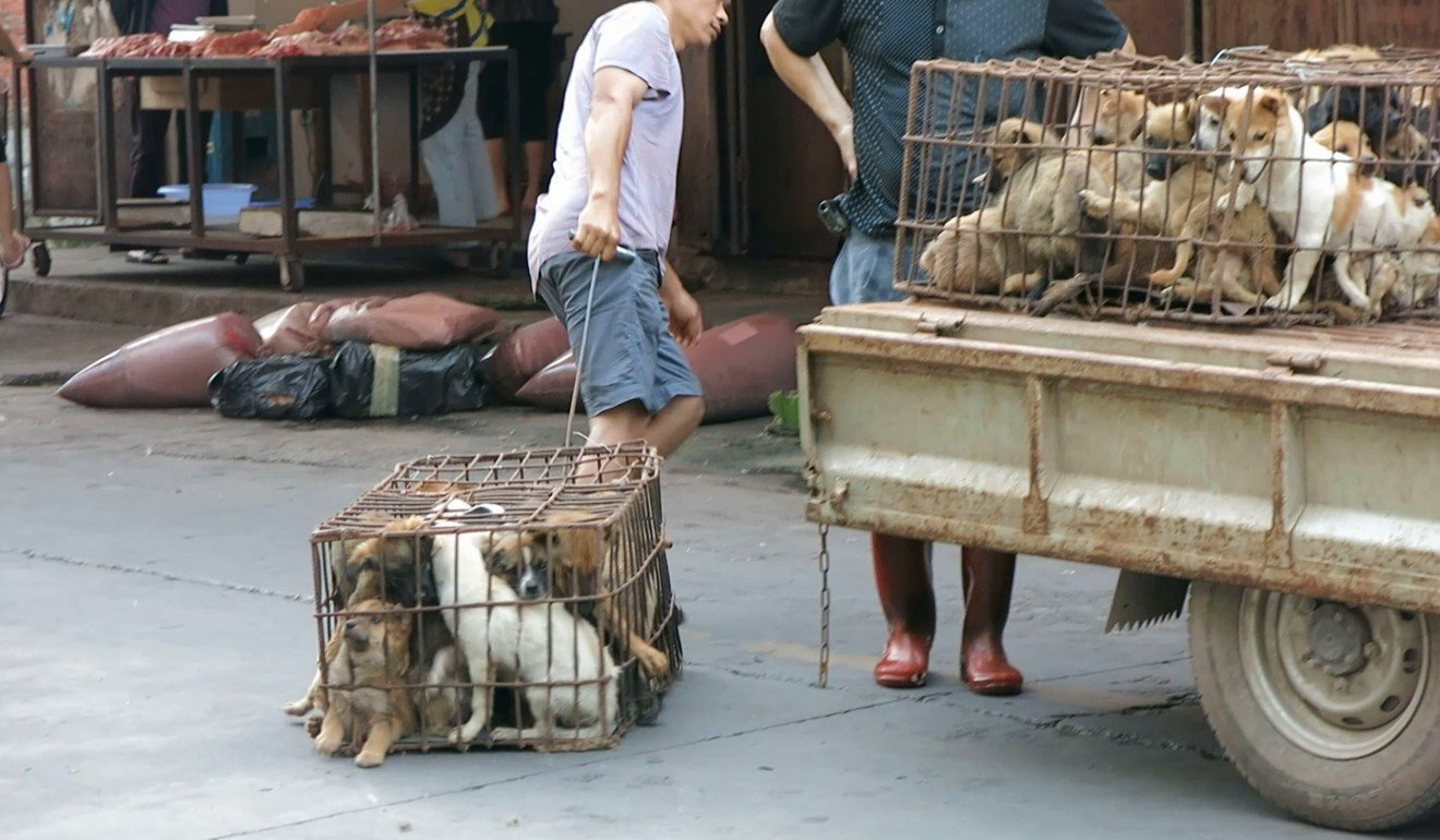 In total some 30 million dogs are slaughtered every year in countries including China, Vietnam, Thailand, Cambodia and Japan. Photo: World Dog Alliance