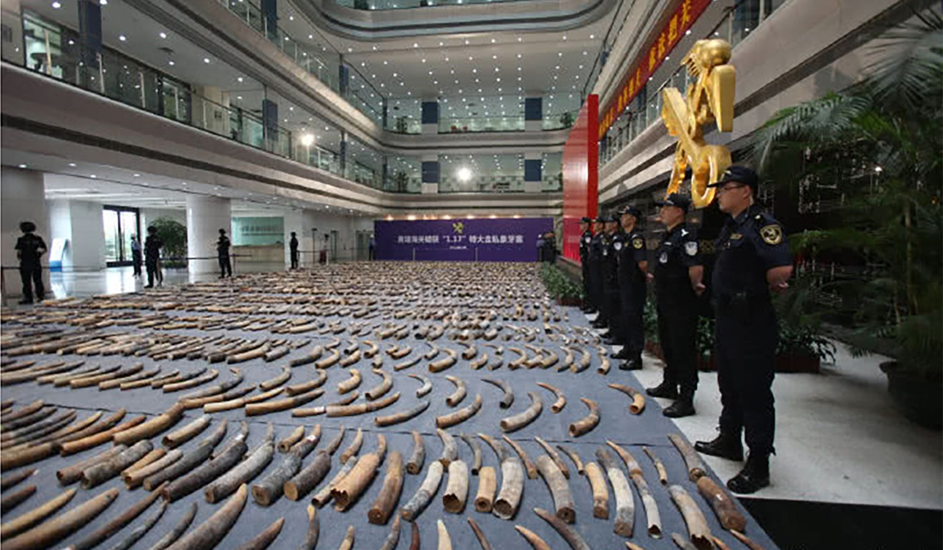 The ivory was seized during a raid on a disused factory in Gaogou, Anhui province. Photo: Sina