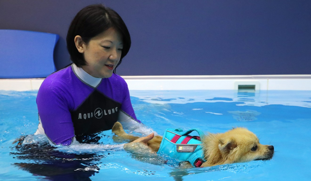 Tan works with Rusty, an injured Pomeranian. Photo: Edmond So