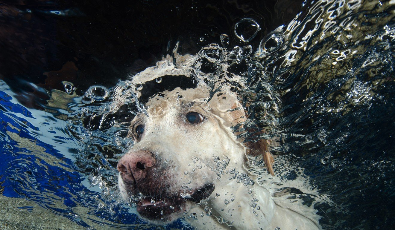 Some dogs take to water while others need encouragement. Photo: Shutterstock
