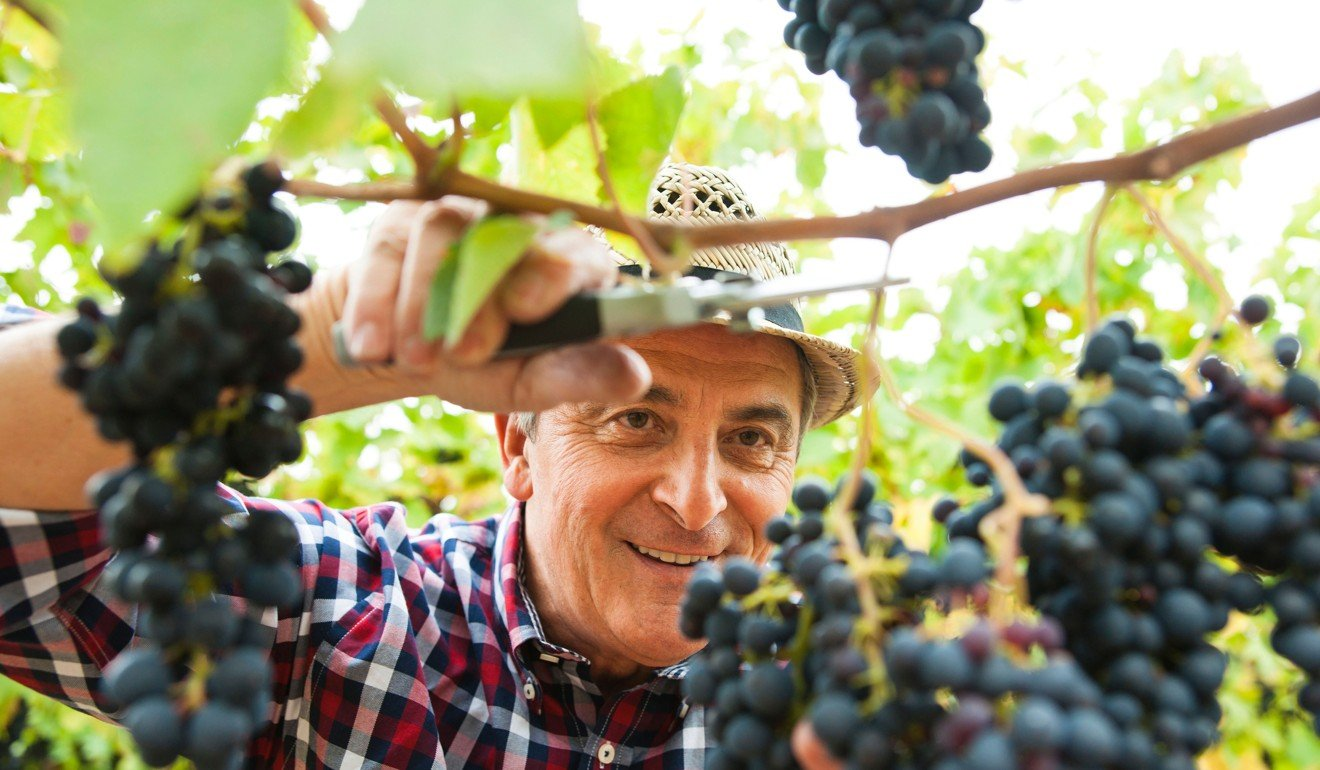 A glass or two of red wine can help you live longer. Photo: Alamy