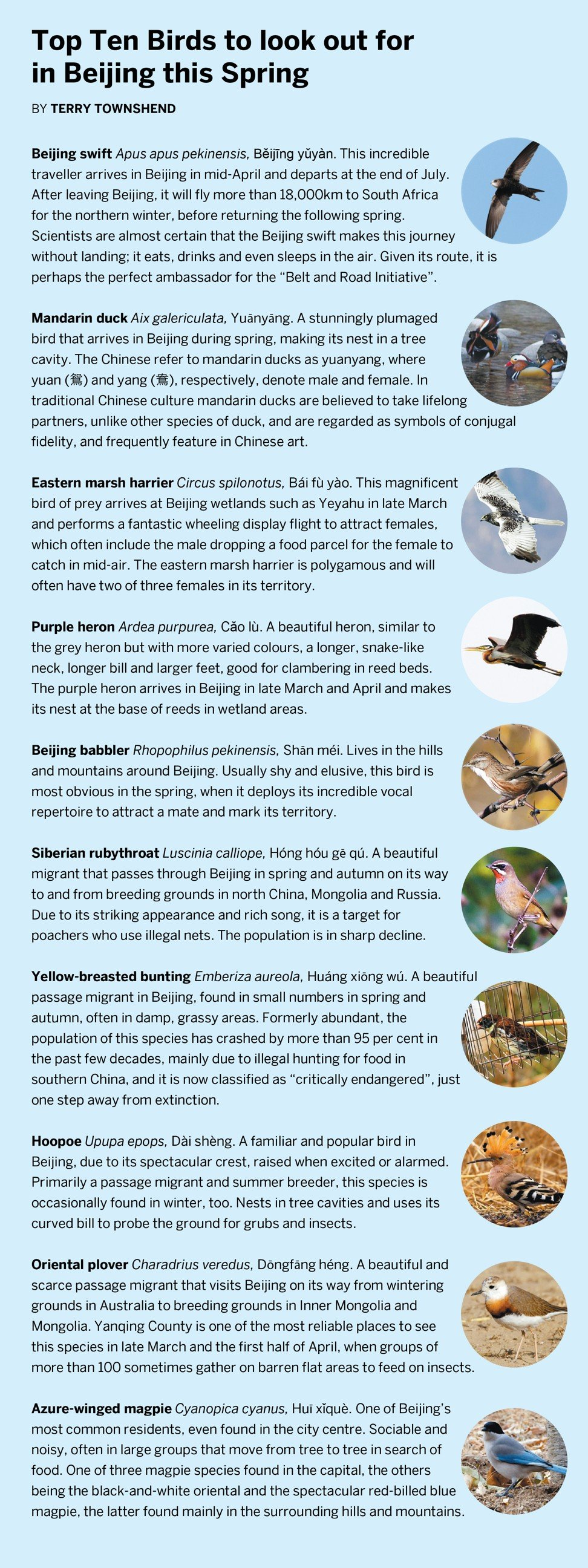 Birds of Beijing: China's capital is important point on