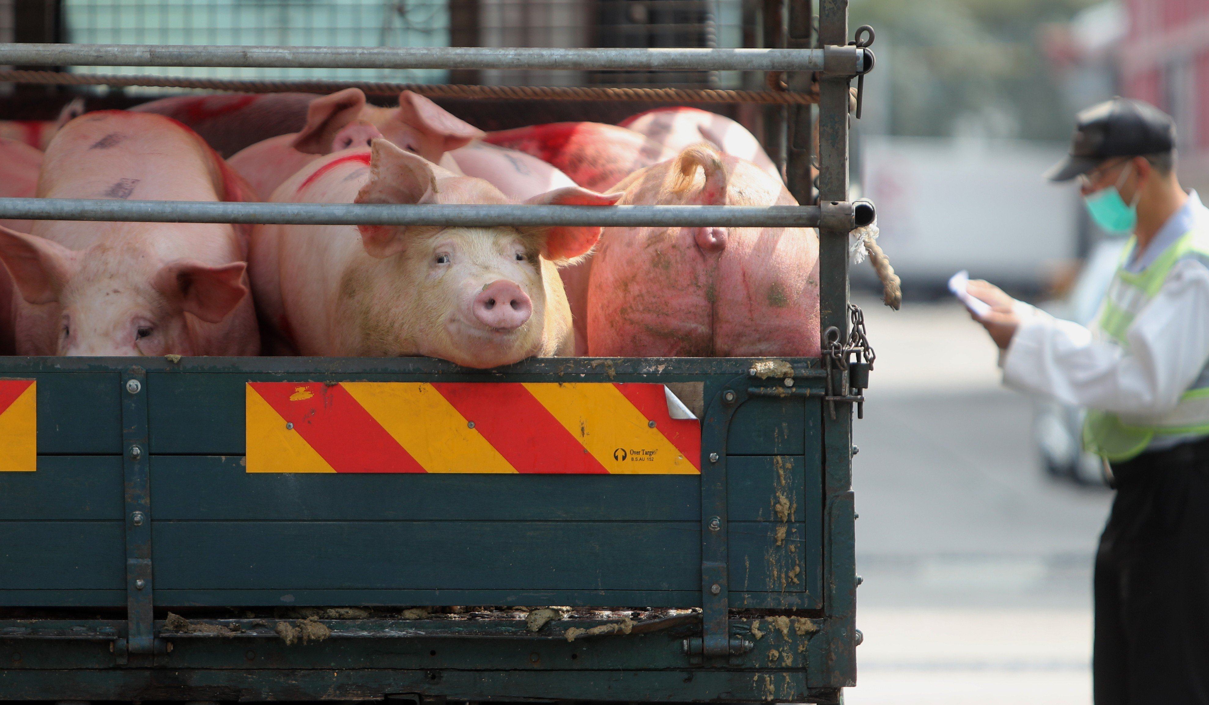 Some 30 per cent of pig farms in mainland China rumoured to