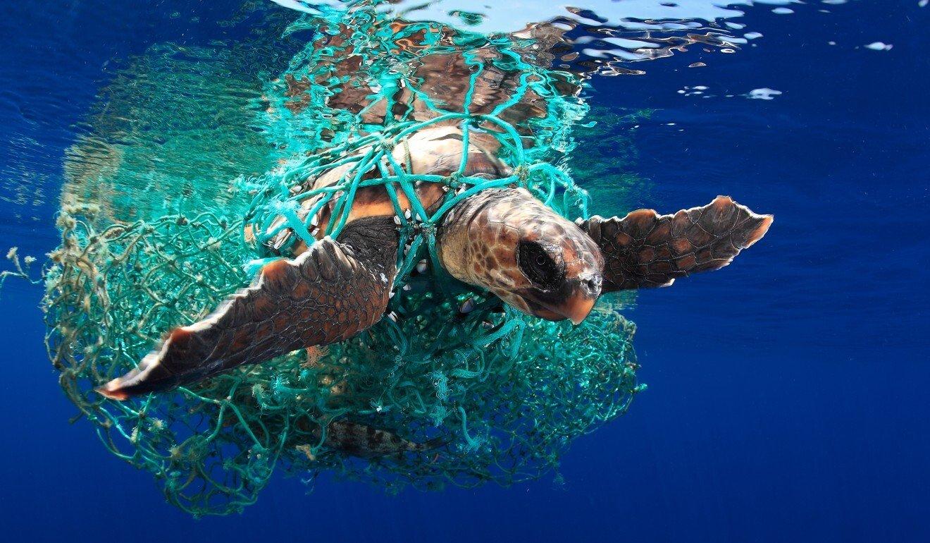 Hong Kong diver, 66, wages marine war against ocean's silent killers