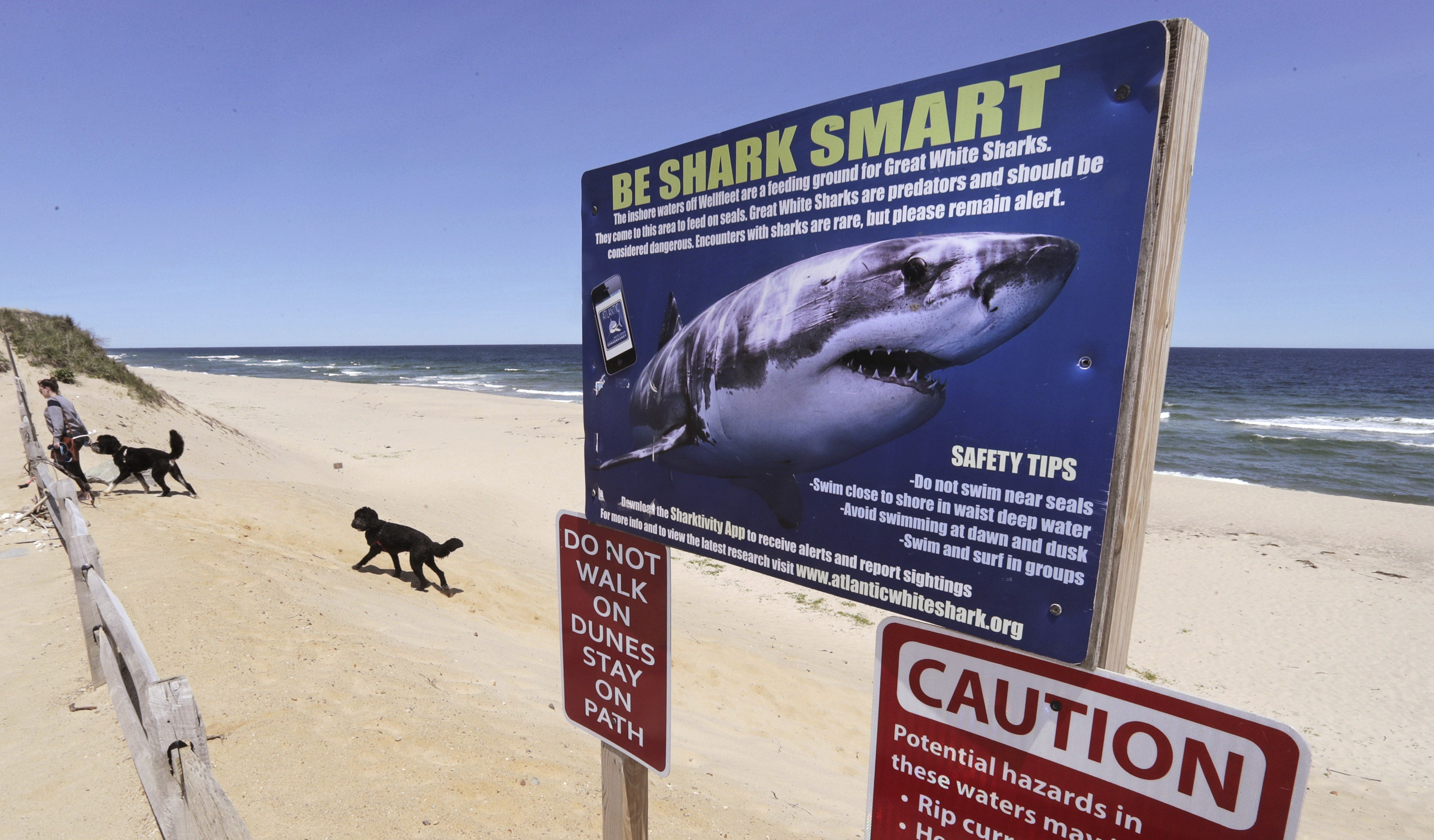 US student Jordan Lindsey attacked and killed by three sharks while