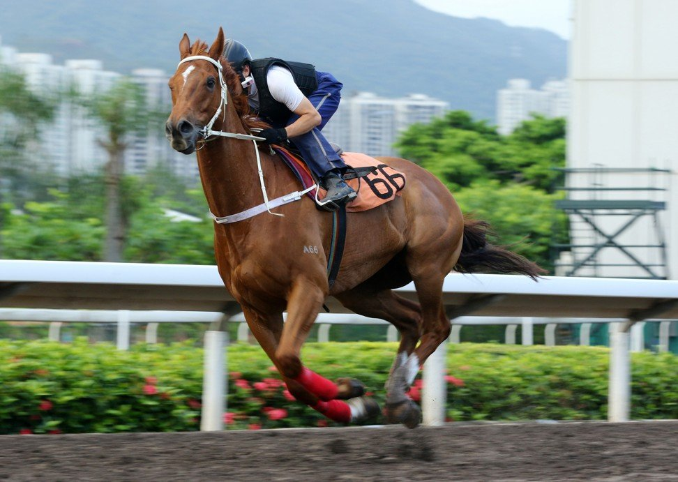 Time Warp works at Sha Tin on Thursday.