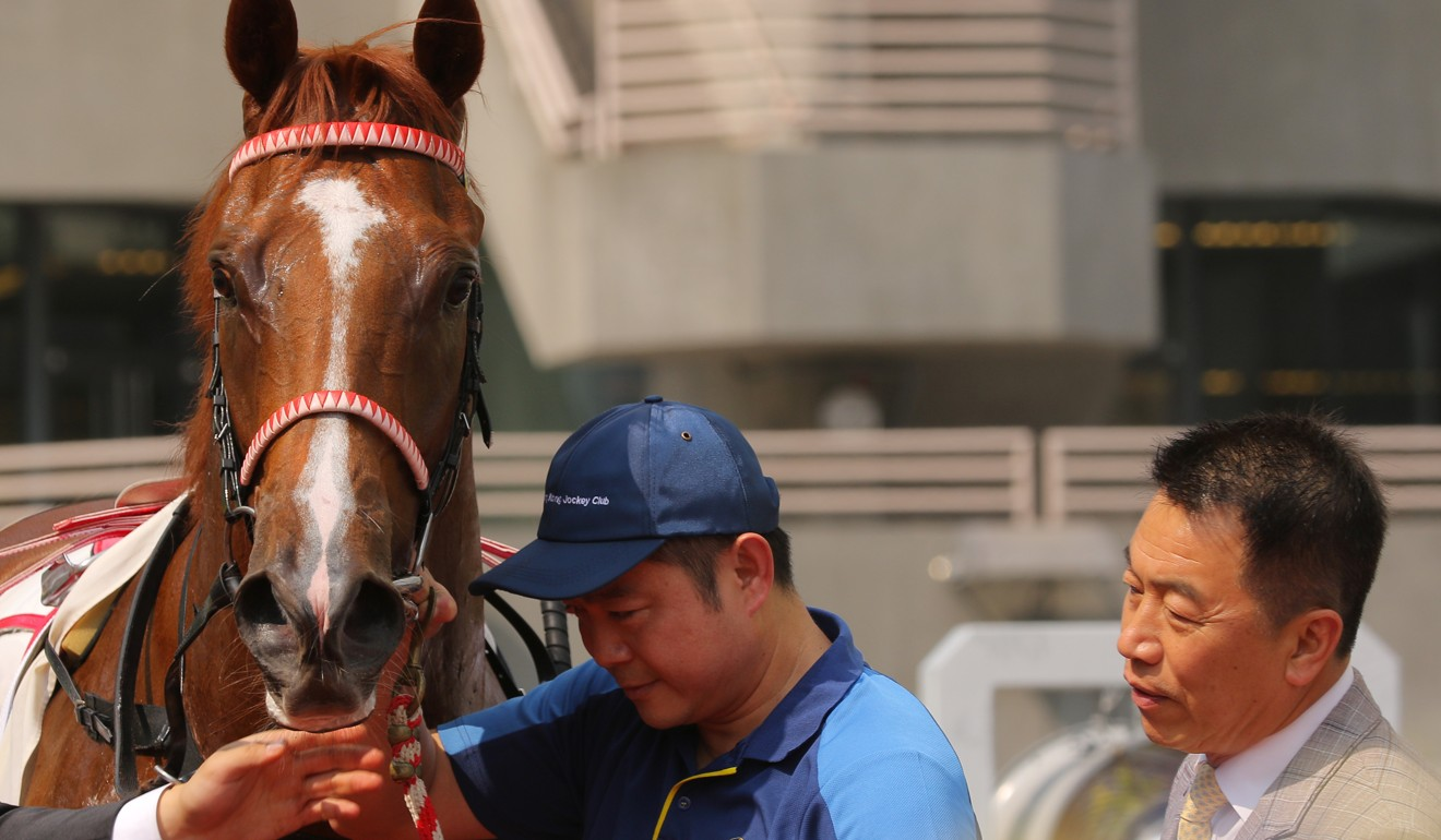 Trainer Ricky Yiu looks over his potential star Voyage Warrior.