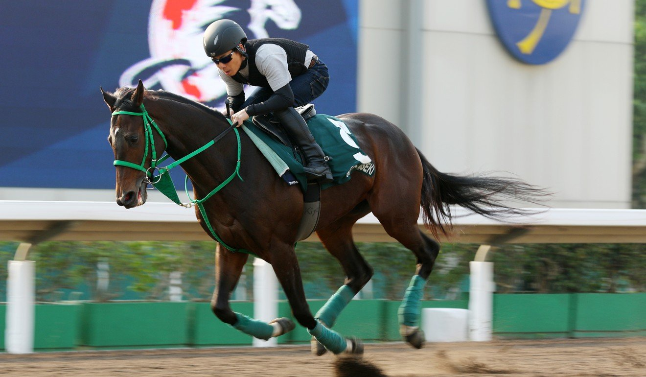 Kiseki gallops at Sha Tin.