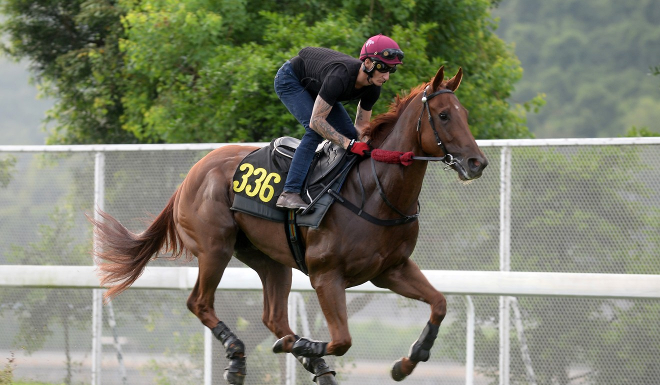 Aethero galloping at Sha Tin on Thursday morning ahead of Monday's race.