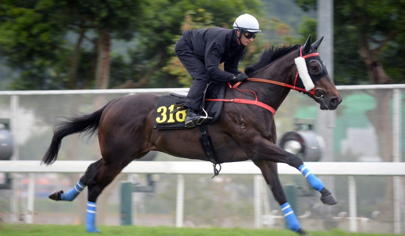 Zac Purton gallops Beauty Spark at Sha Tin.
