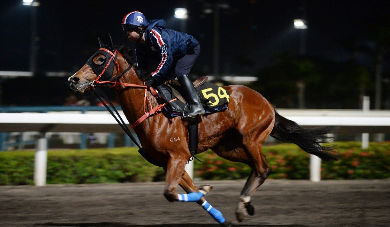 Glorious Spectrum gallops on the Sha Tin all-weather surface.