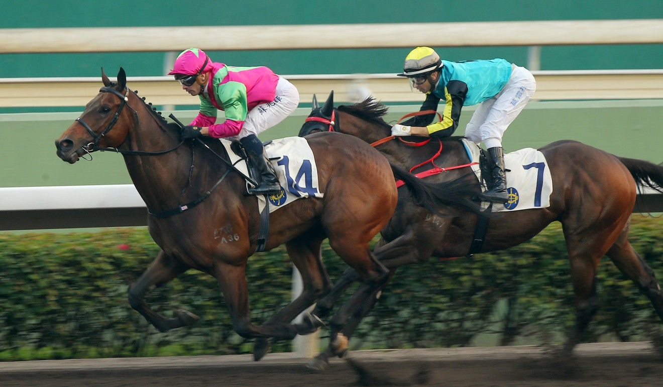 Elusive State wins another race on the Sha Tin all-weather surface.