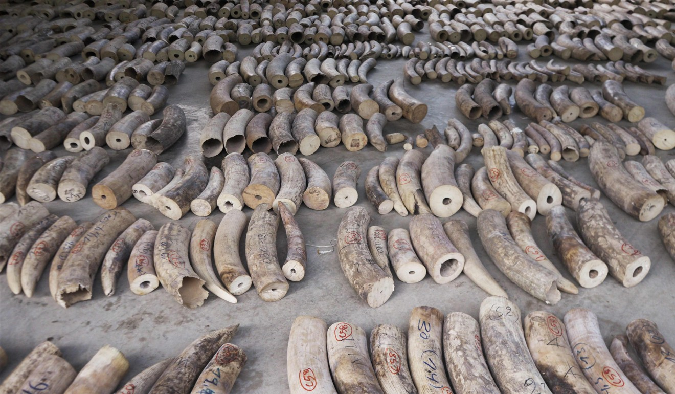 Some of the ivory seized by Singapore in July. Photo: AFP