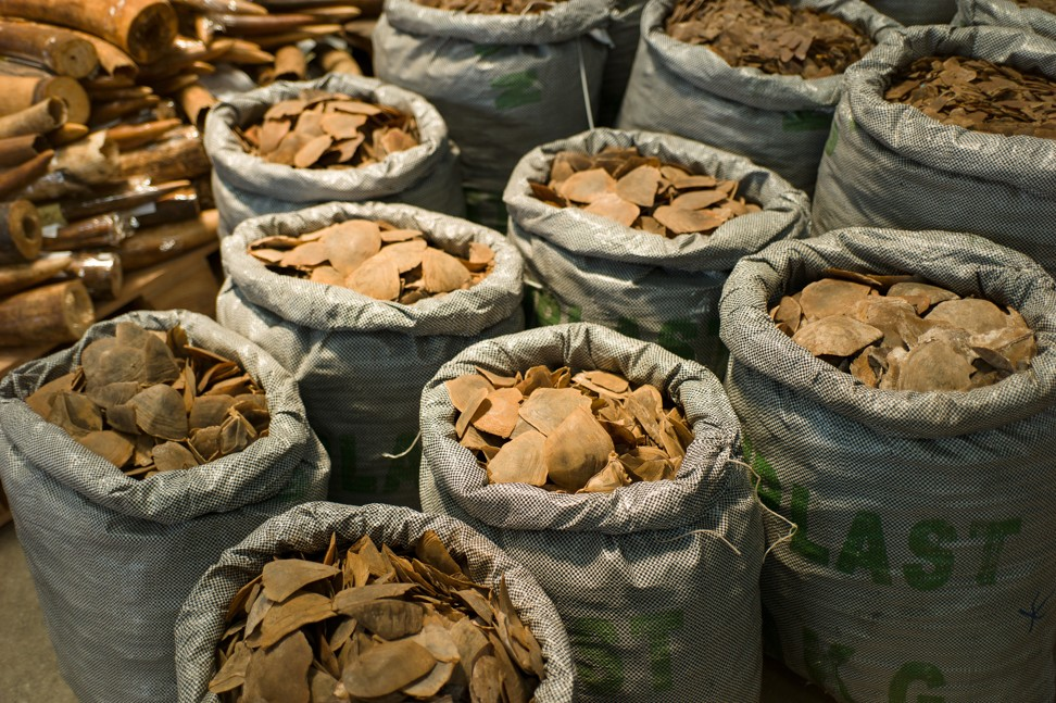 Seized bags of dried pangolin scales displayed during a press presentation at Kwai Chung Customhouse in Hong Kong in September last year, following a 10-week joint operation targeting smugglers of endangered species at the city's airport, seaport, land boundary and railway control points. Photo: EPA-EFE
