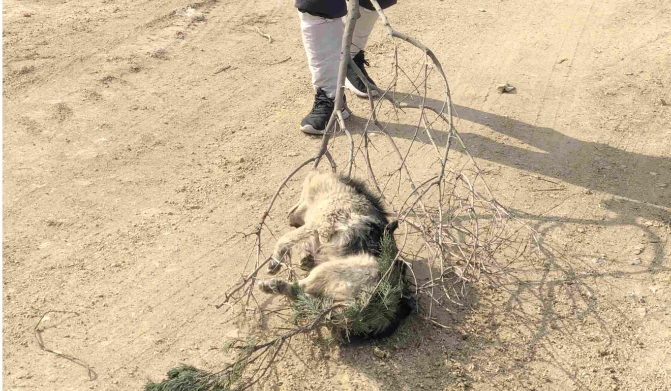 Chinese documentary director Zhu Yu defies Beijing's boycott of Taiwan's Golden Horse awards