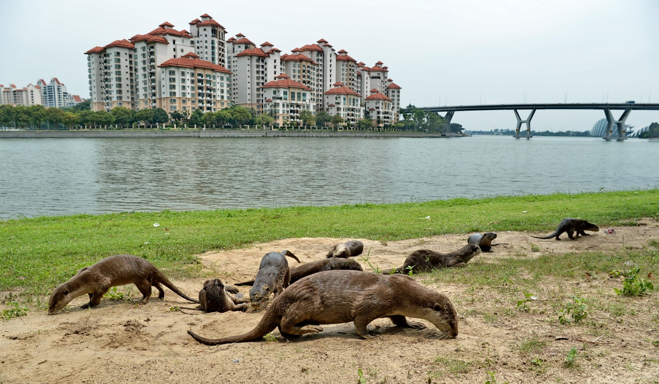How Instagram is helping drive wild otters to extinction