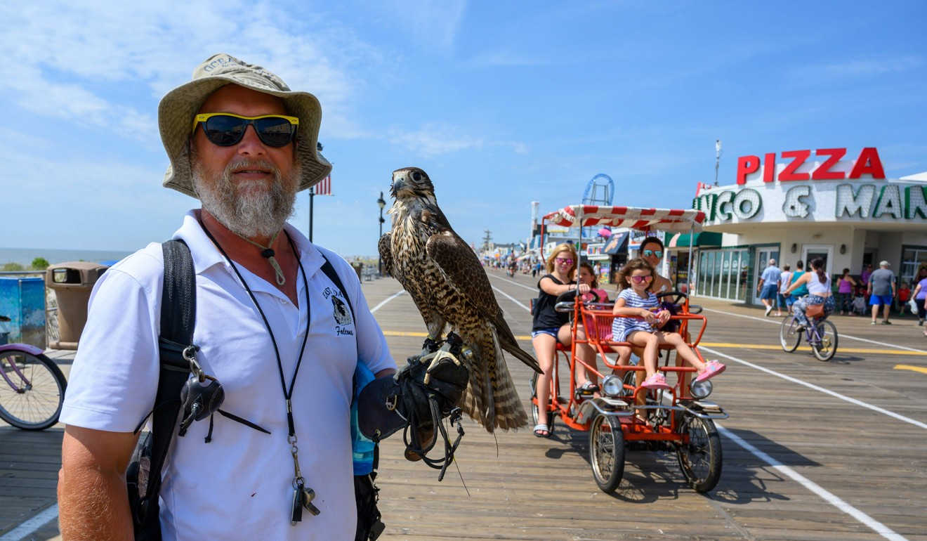 The US seaside resort that relies on hawks to ward off hungry gulls