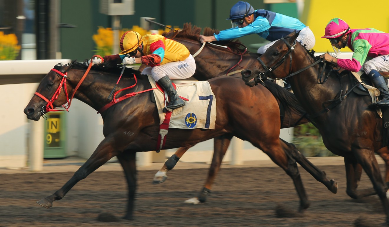 Big Time Baby wins Sunday's Class Two Po Yan Handicap.