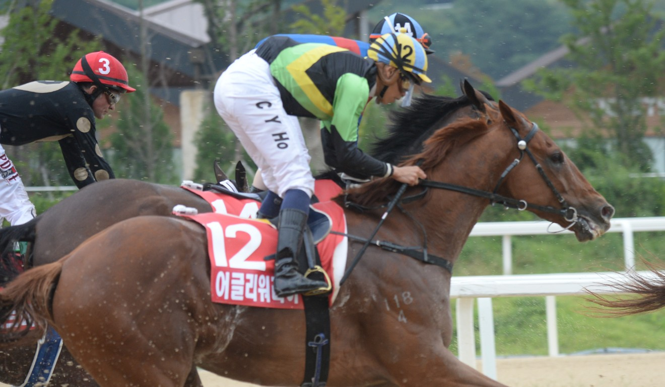 Ugly Warrior finishes at the rear of the field in the Korea Sprint on Sunday.