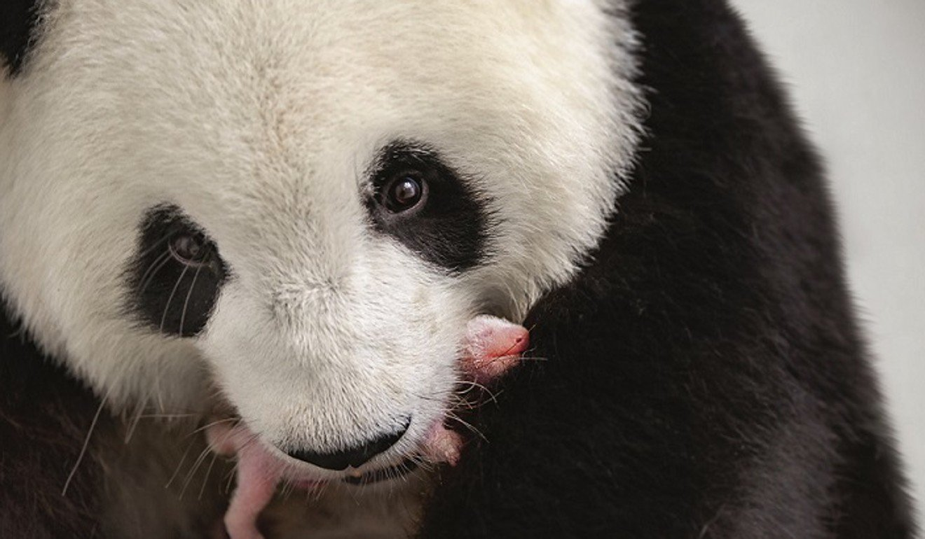 Berlin zoo says it will keep politics out of naming panda cubs after German public votes for Hong and Kong