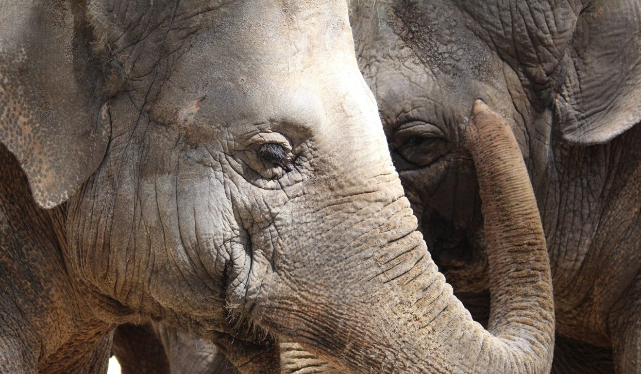 5 ways to make sure you're visiting an ethical elephant sanctuary – and where you can find them