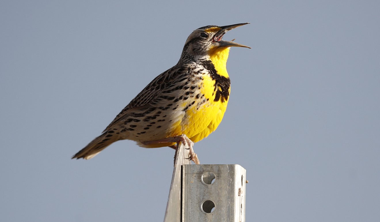 Where have the wild birds gone? North American populations fell by 3 billion since 1970