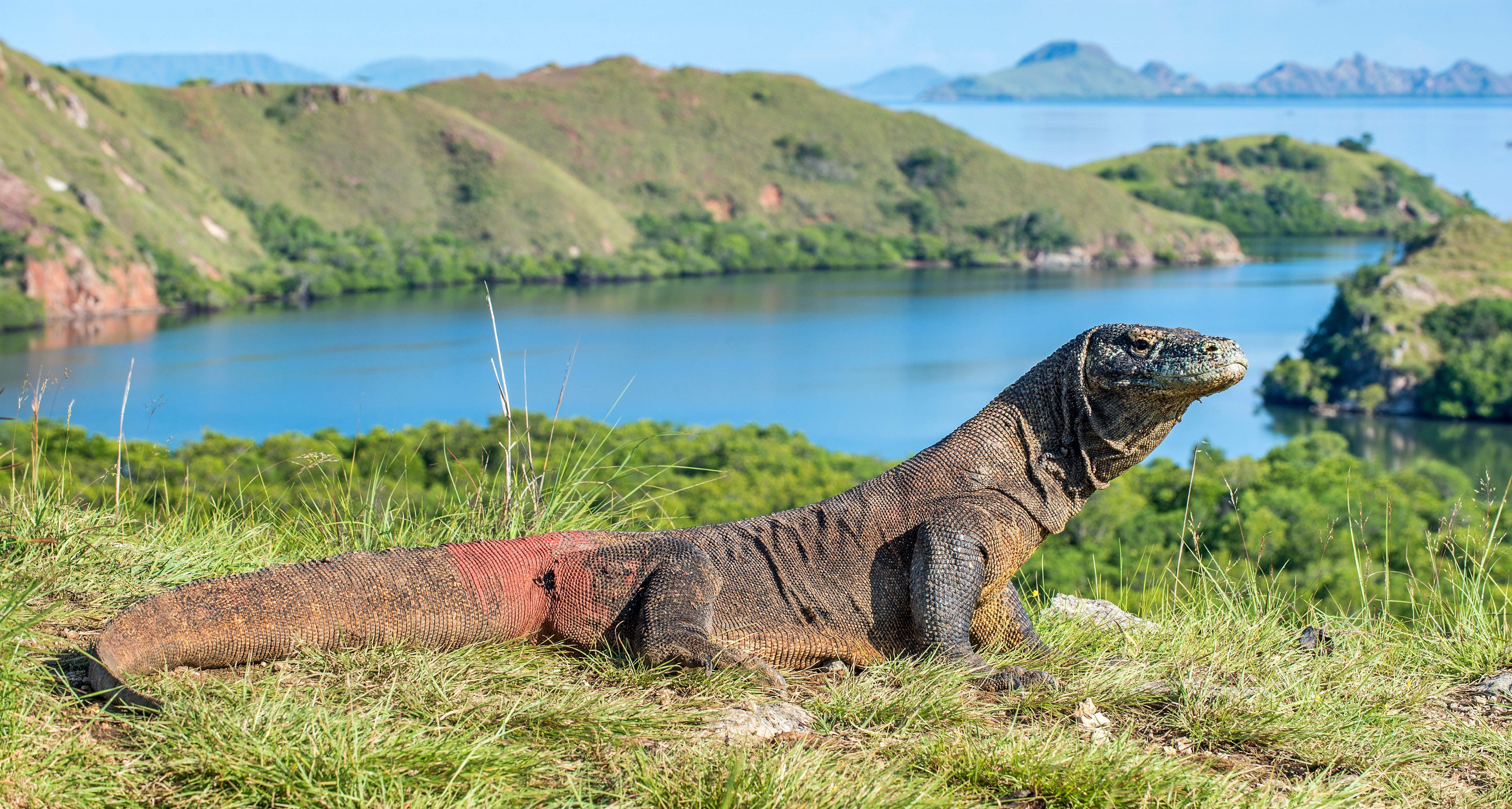 bali island, komodo island, komodo dragon, Bali adventure