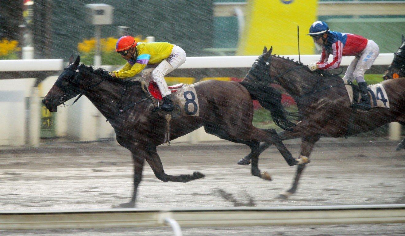 Master Bernini finishes second to Hidden Spirit.