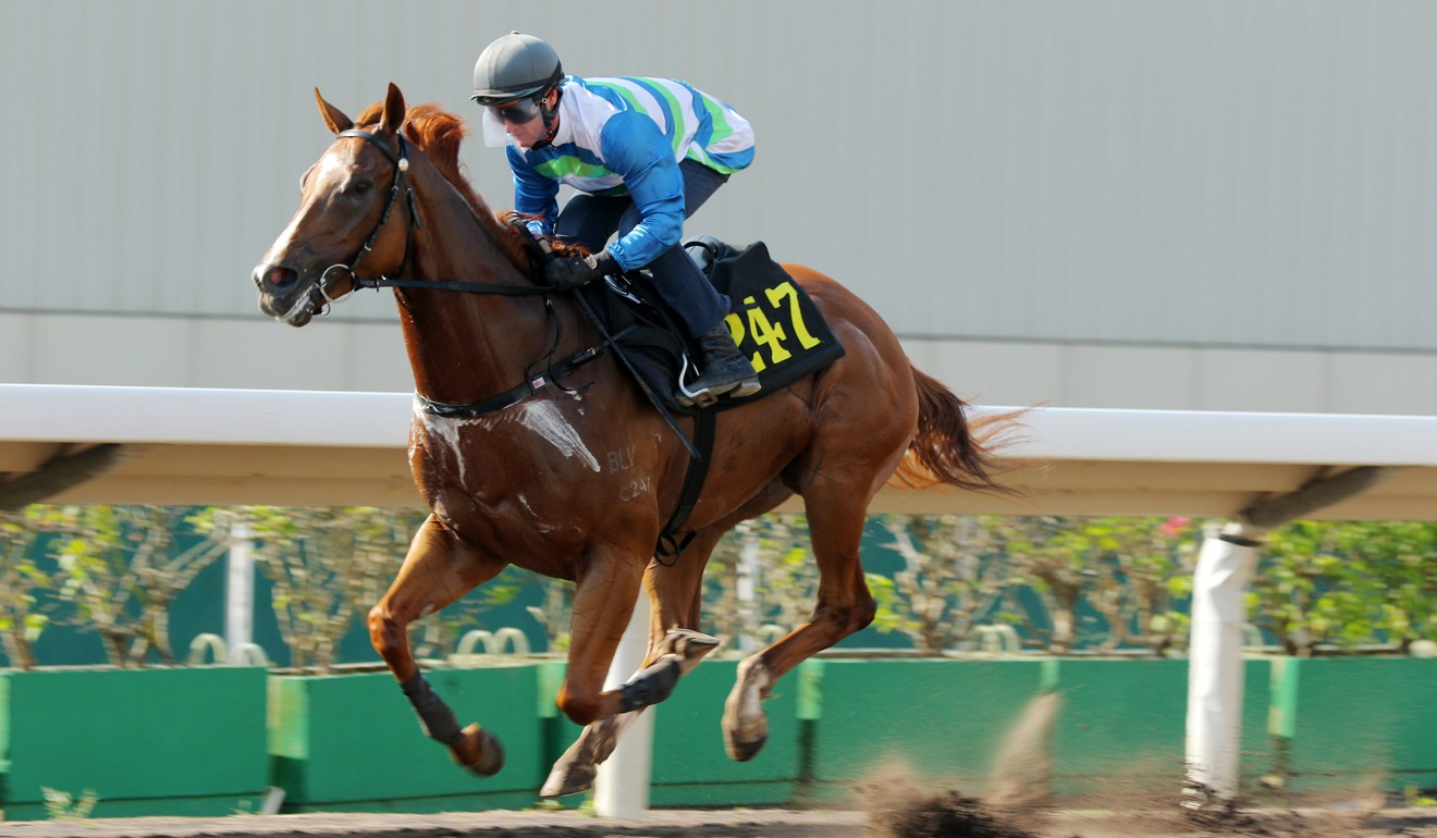 Voyage Warrior coasts to victory in a barrier trial last week.