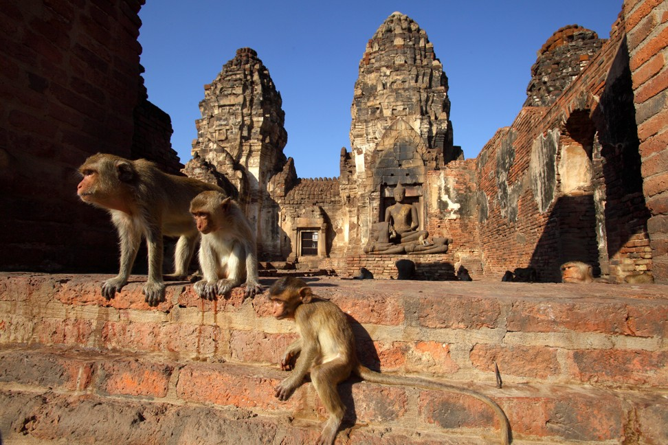 Monkeys gather at Phra Prang Sam Yot temple in the centre of Lopburi. Photo: Alamy