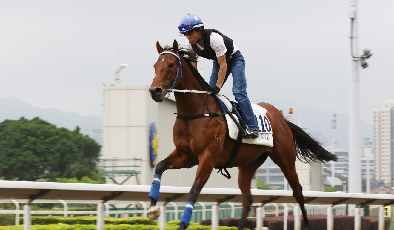 Joyful Trinity gallops on the Sha Tin all-weather surface.