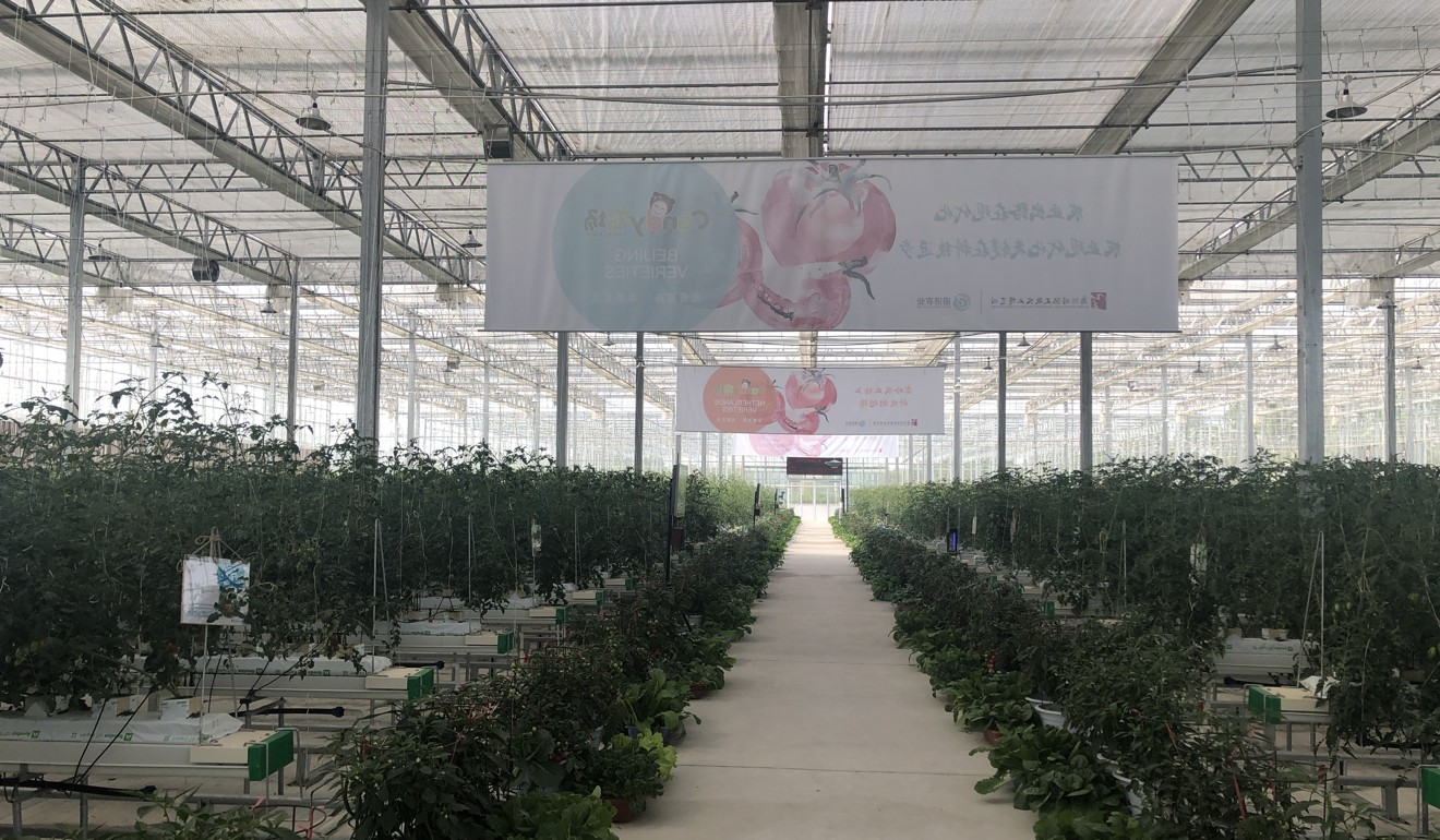 Smart tomato farm in Wuzhen uses sensors connected to 5G network to improve crop yields. Photo: SCMP