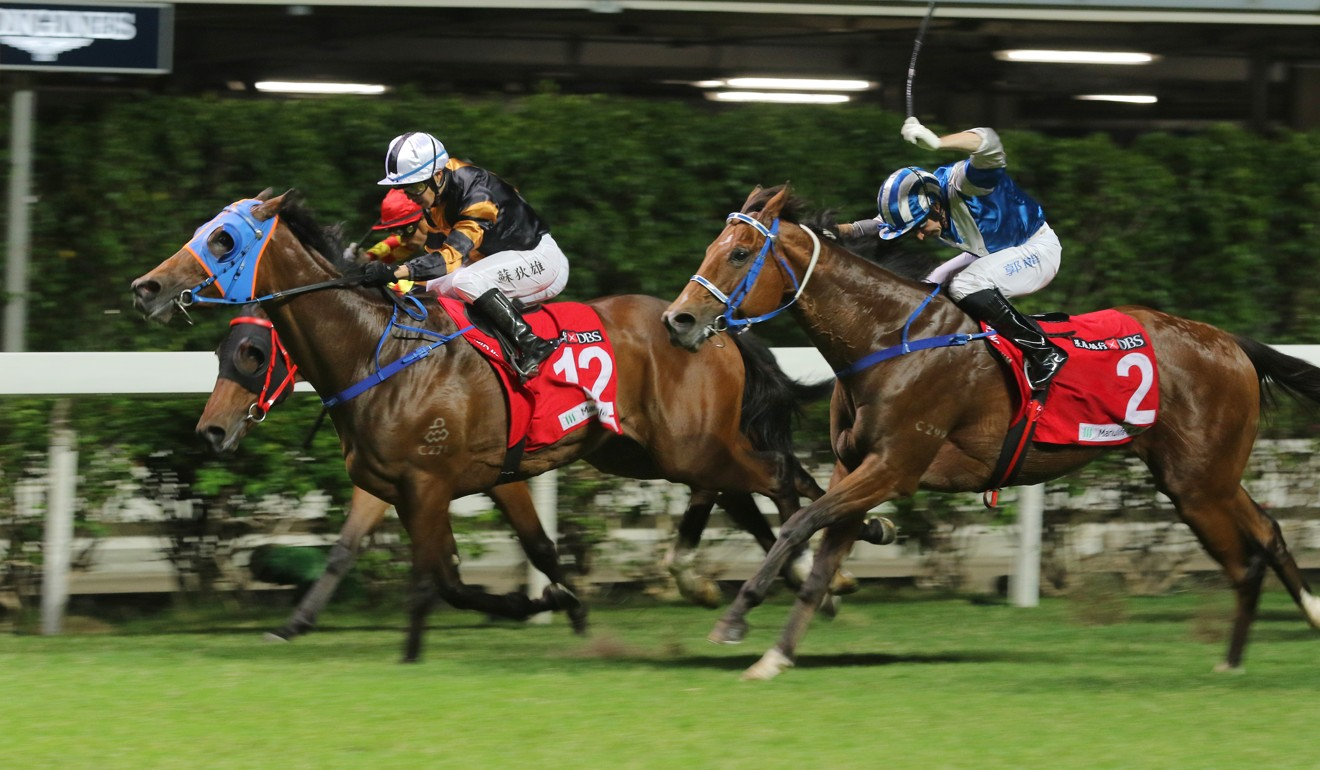 Baby (middle) fights off his rivals at Happy Valley.