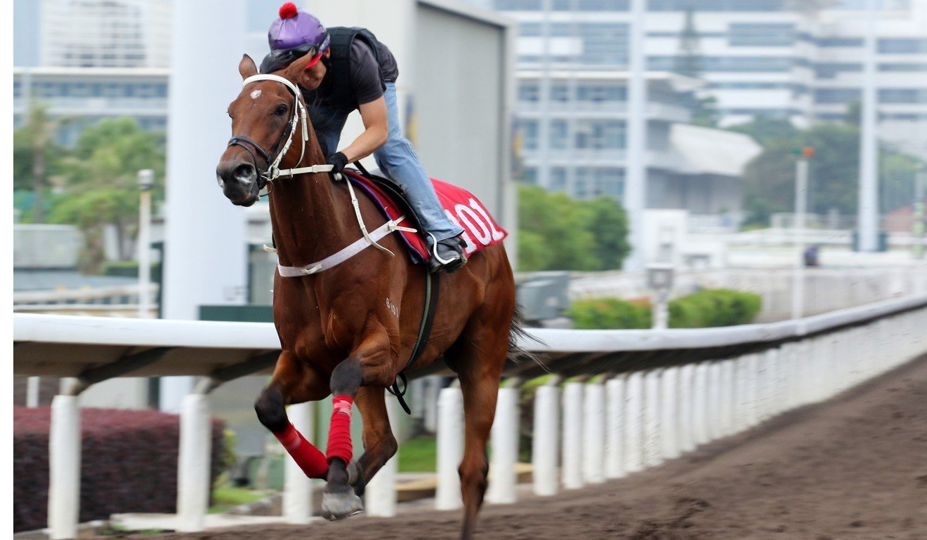 Exultant works on the Sha Tin all-weather surface on Thursday morning.