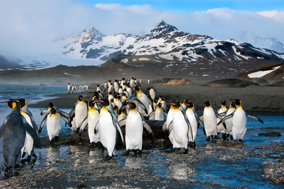 Chinese tourists' Antarctica tour problems highlight market warming to off-the-beaten-path travel