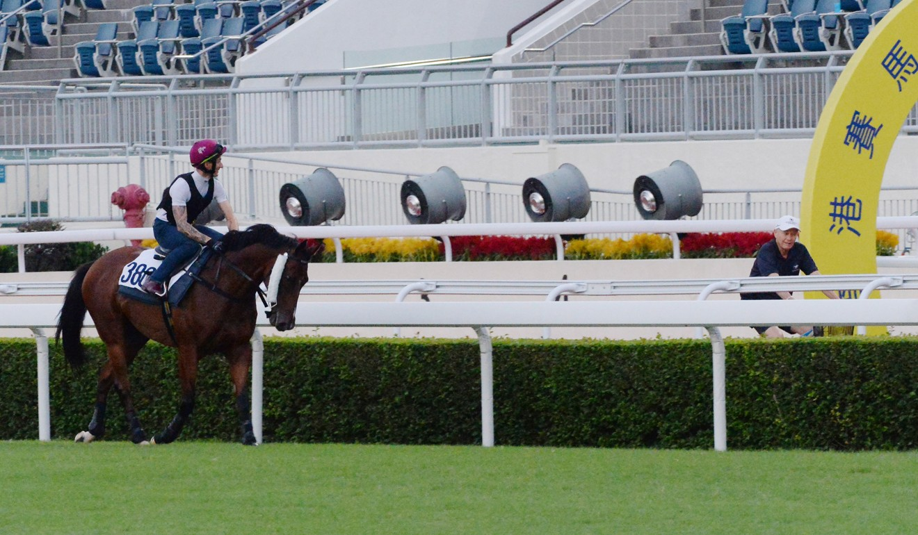 Trainer John Moore looks over Beauty Generation after galloping at Sha Tin.