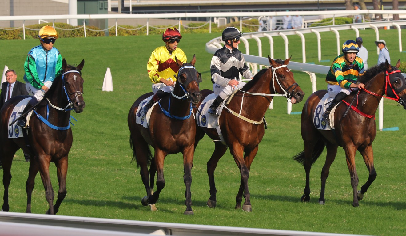 Exultant (second from right) with placegetters Furore (right) and Southern Legend (second from left).