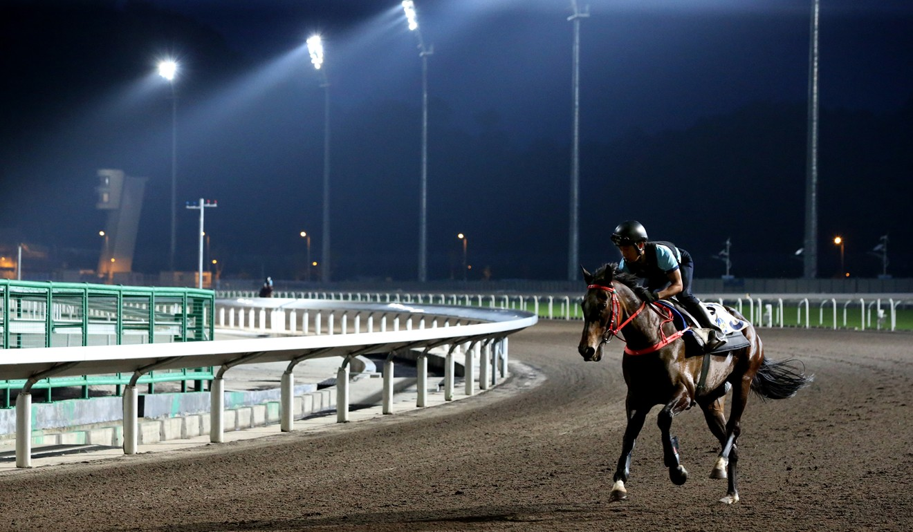 A horse works under lights at Conghua. Photo: HKJC