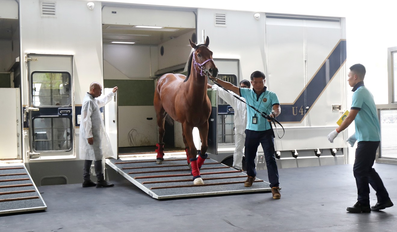 A horse arrives at the Conghua training facility.