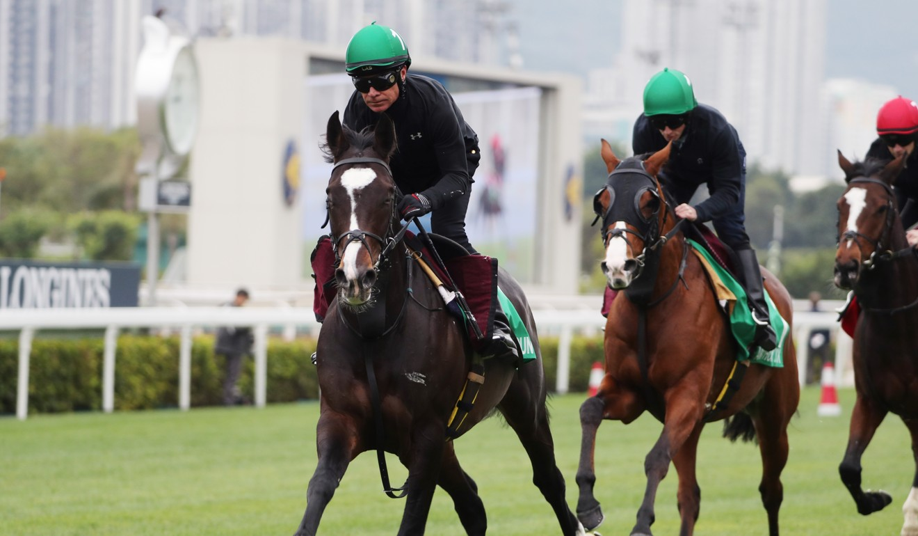Anthony Van Dyck (right) works behind stablemate Mount Everest (left) at Sha Tin ahead of the Hong Kong Vase.
