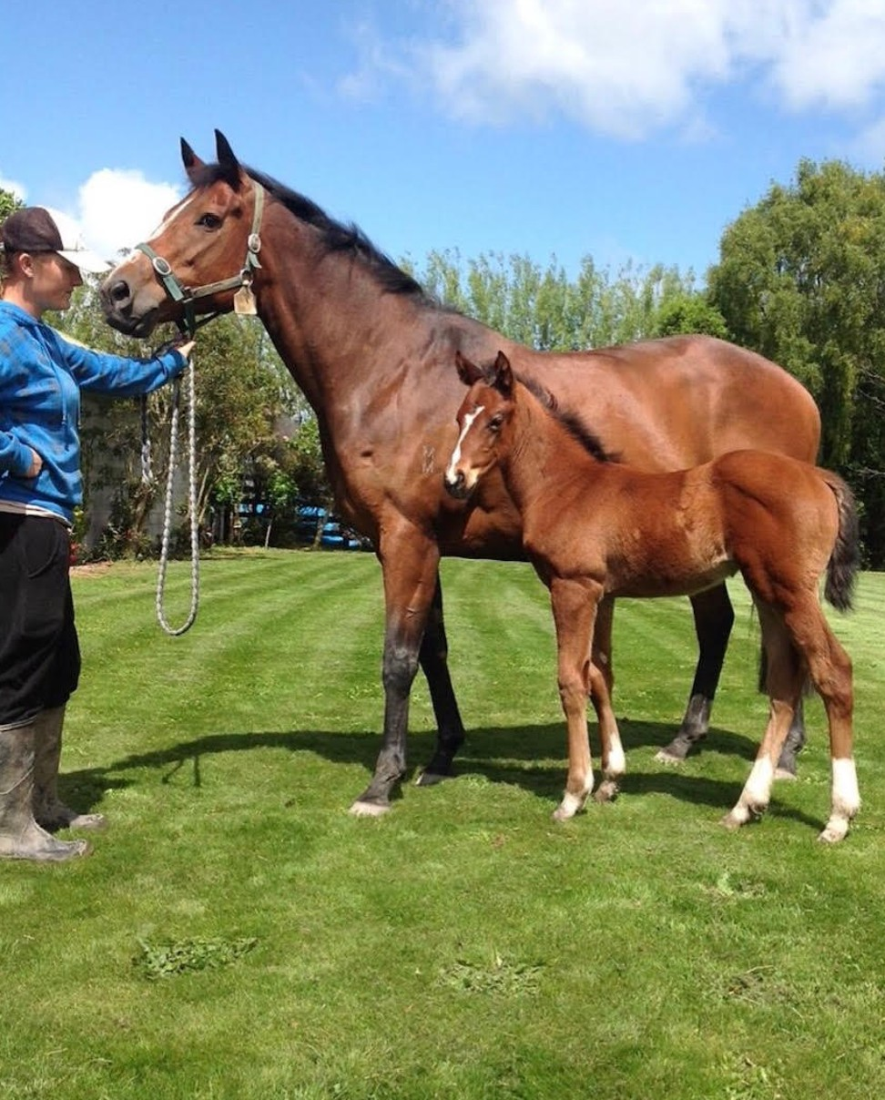 Stylish Bel and Beauty Generation as a foal in New Zealand. Photo: Highden Park